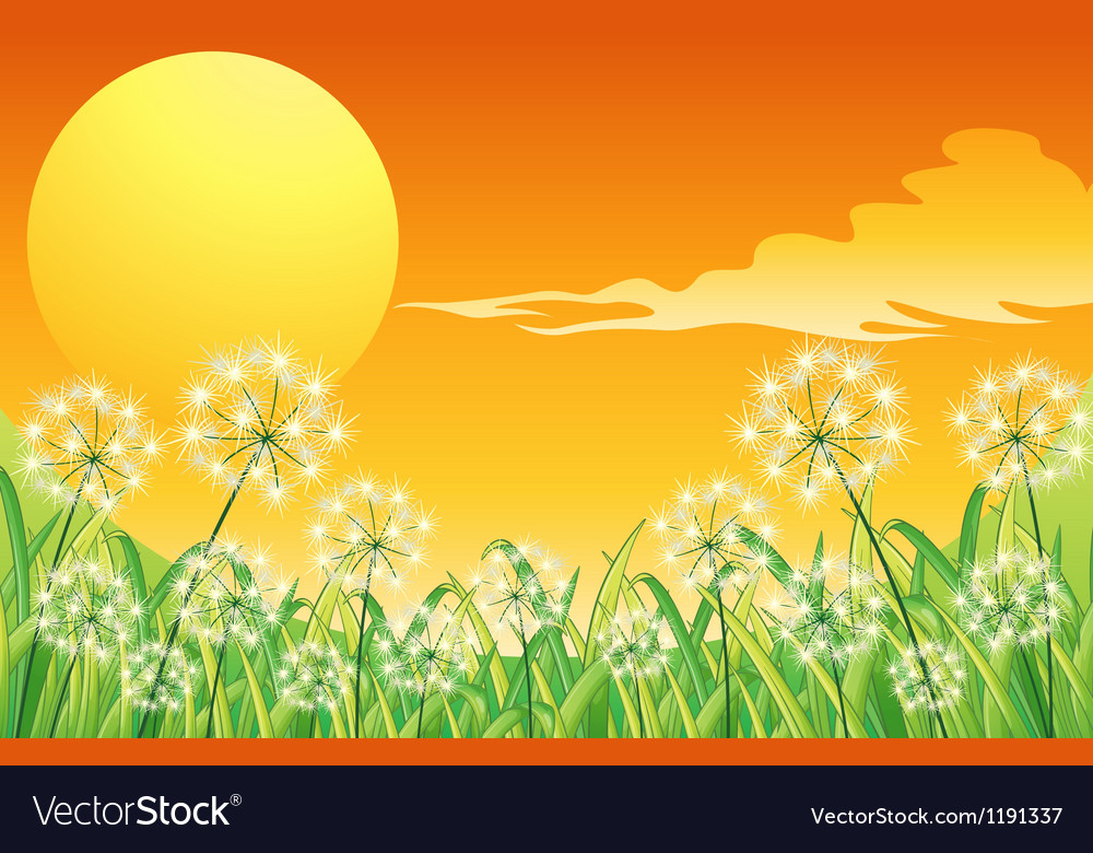 Bright sunset scenery vector