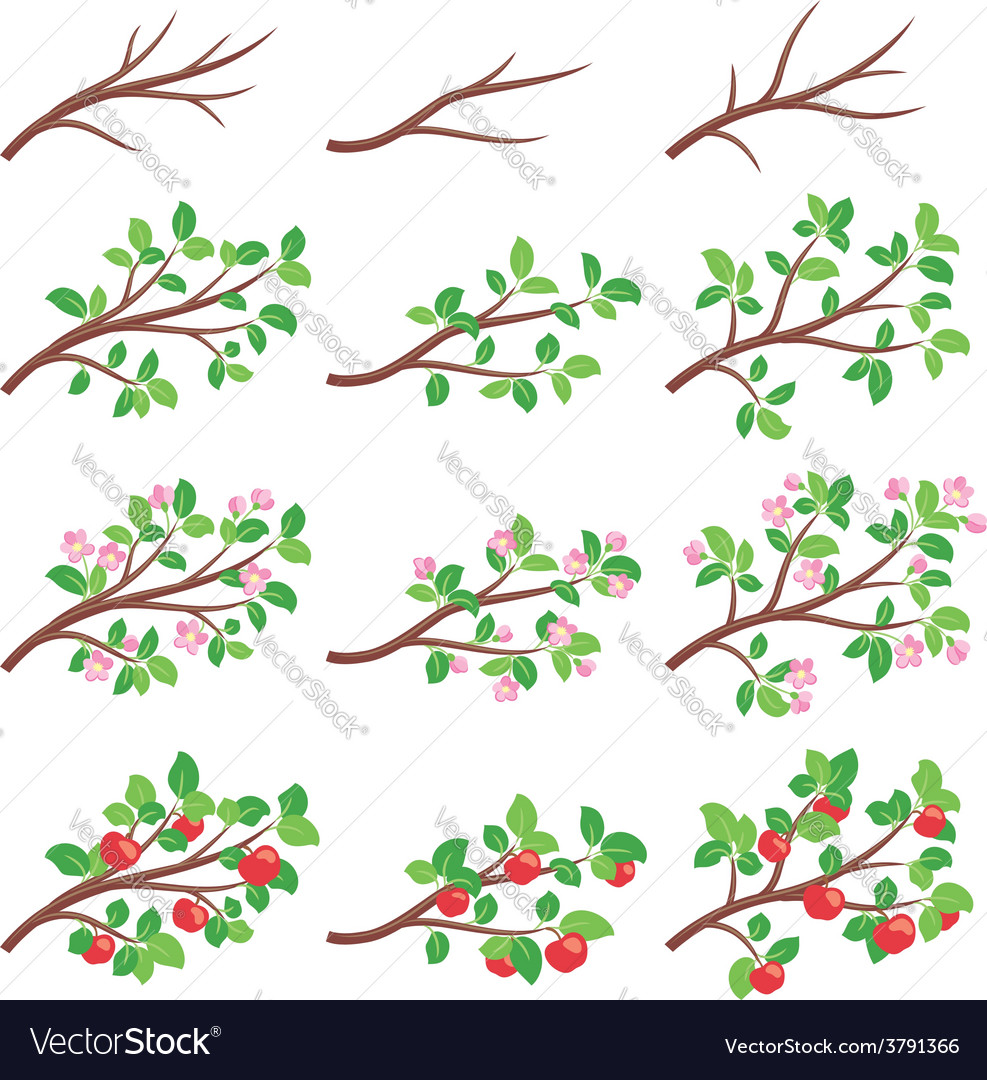 Apple tree branches vector