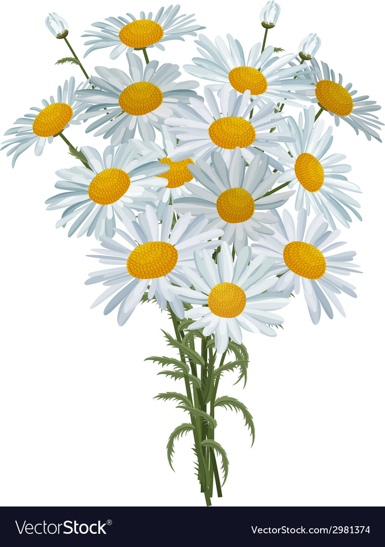 White realistic daisies isolated vector