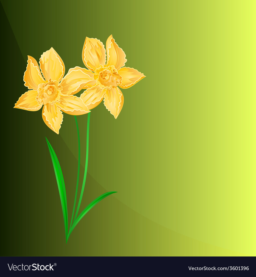 Daffodil spring flower green background vector