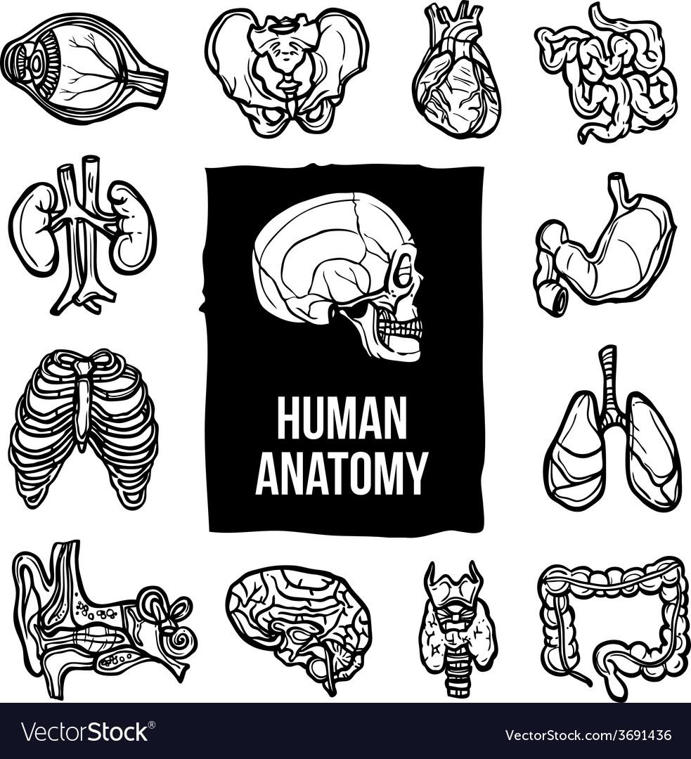 Anatomy icons set vector