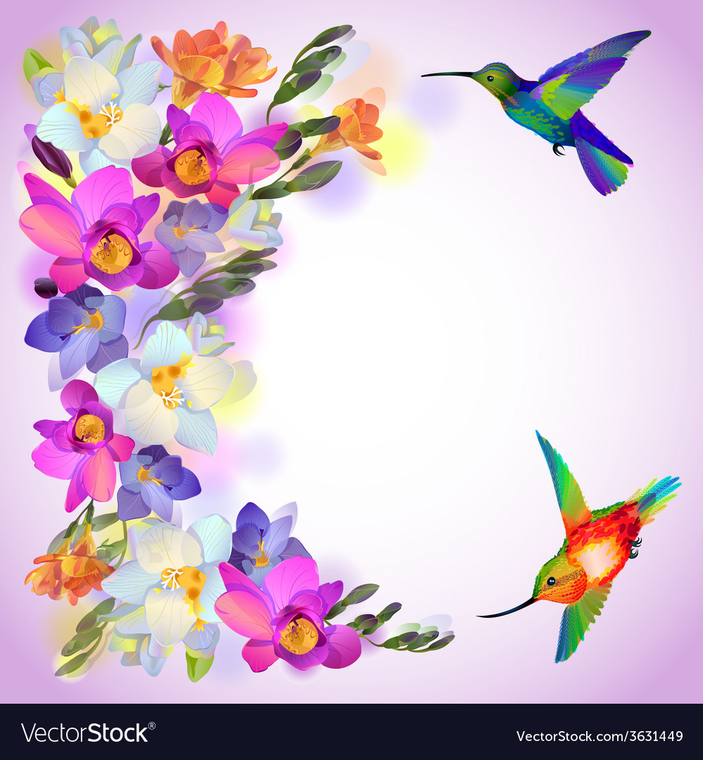 Lilac card with freesia flowers and humming birds vector
