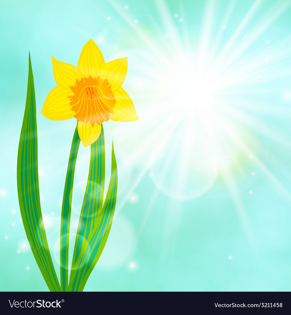 Spring card background with daffodil and sun vector