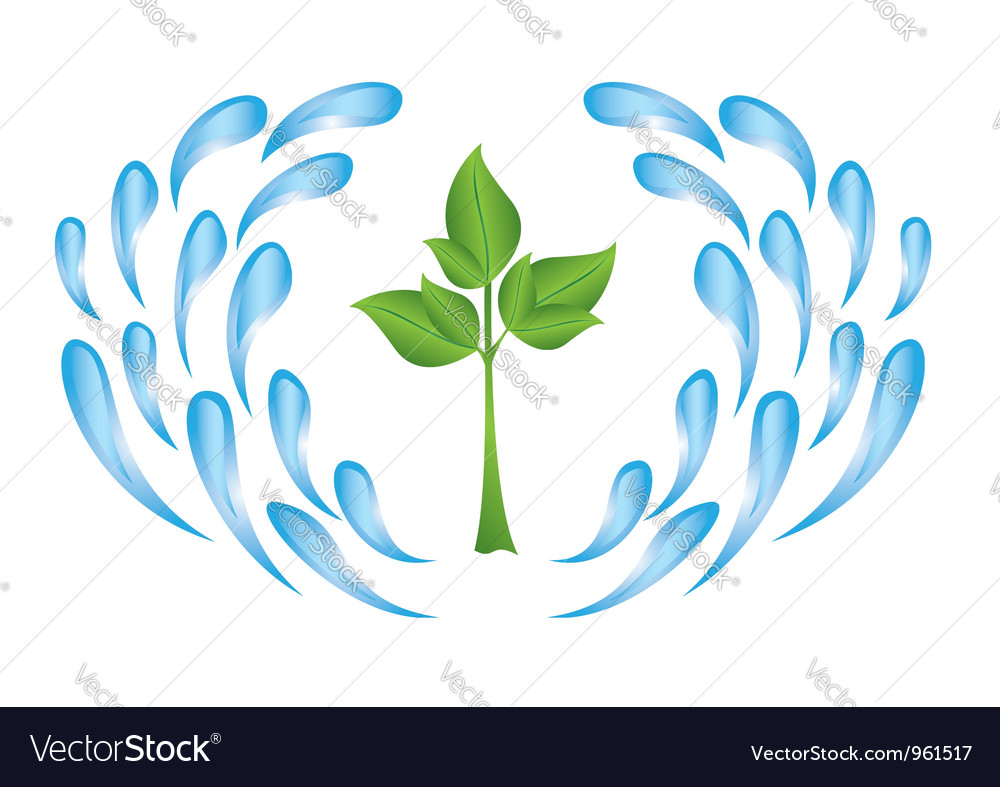 Plant and drops vector