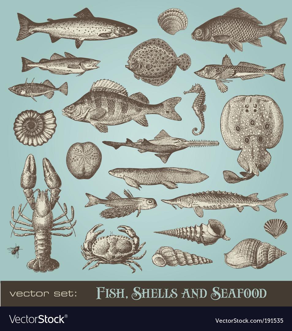 Set fish shells and seafood vector