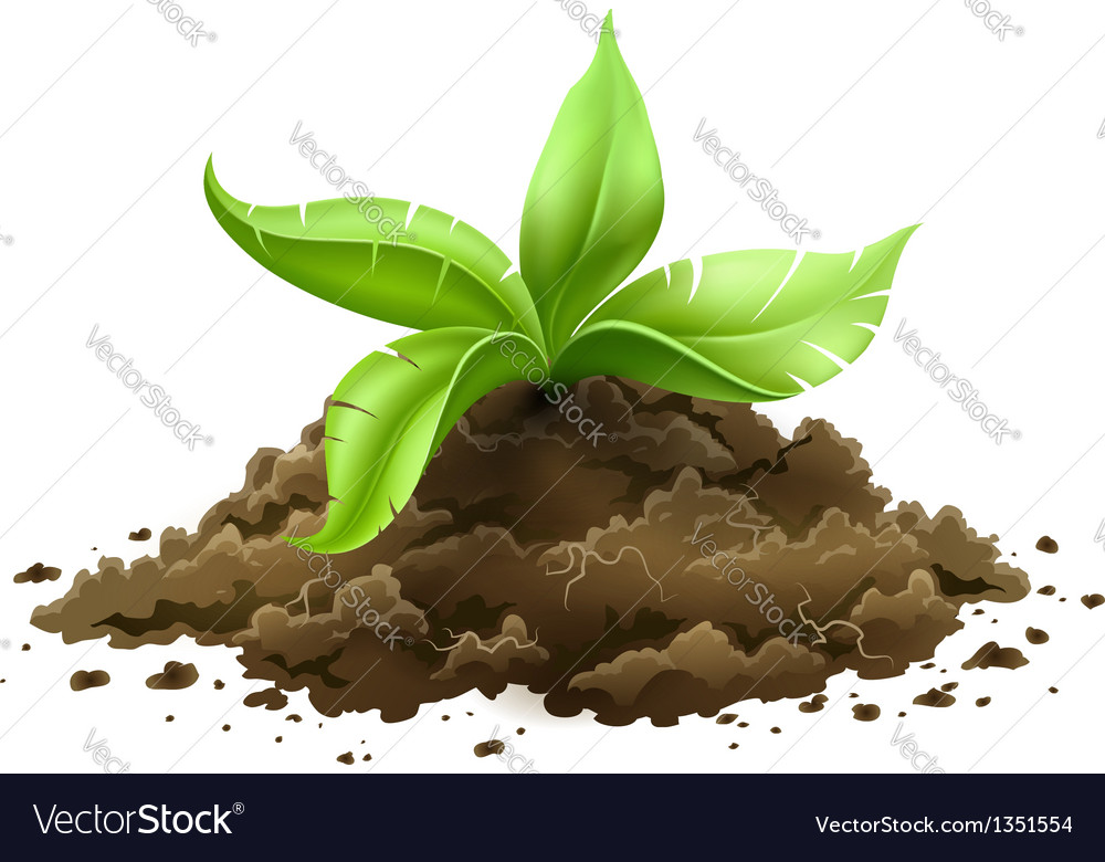 Plant with green leaves vector