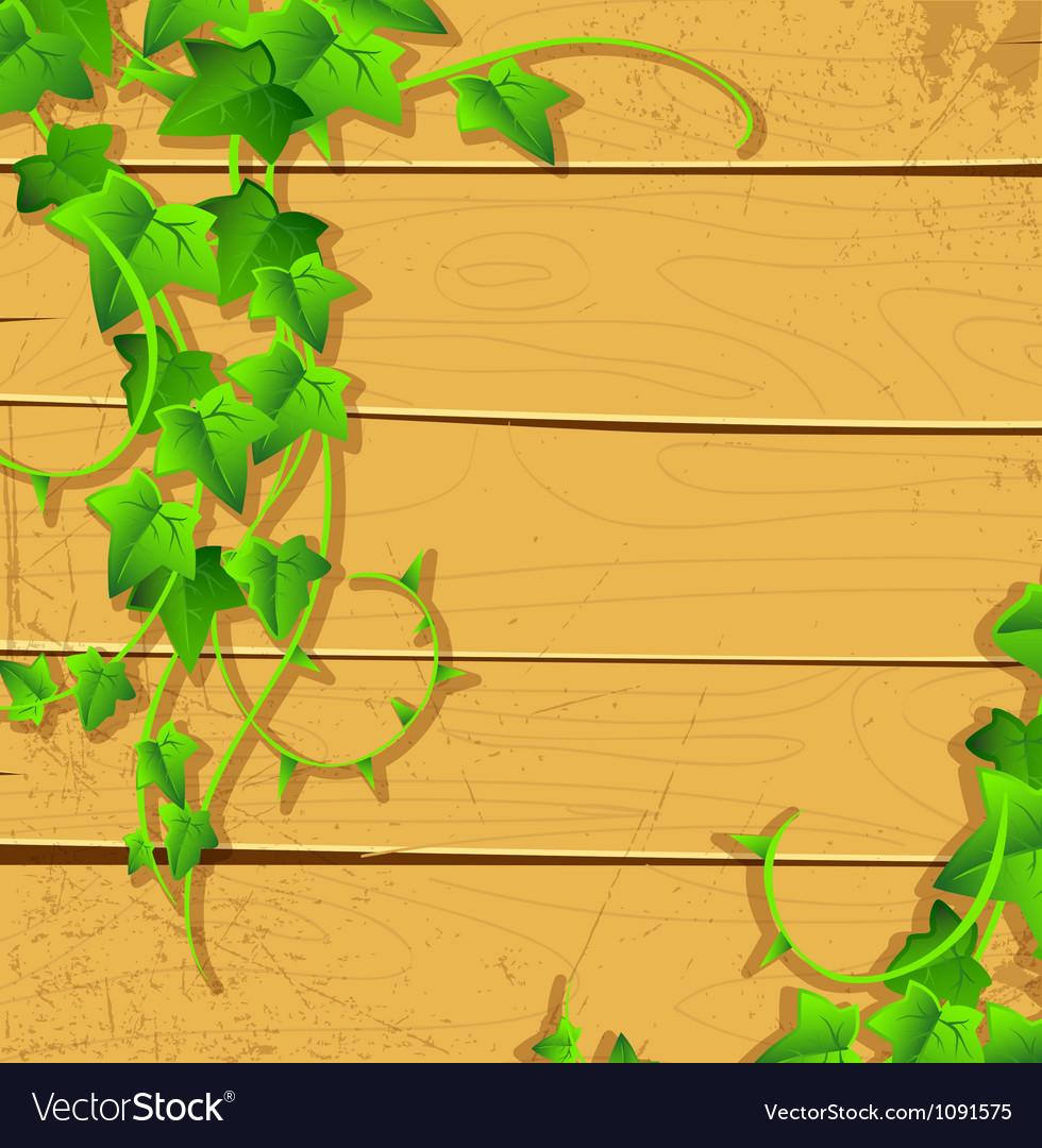 Ivy back vector