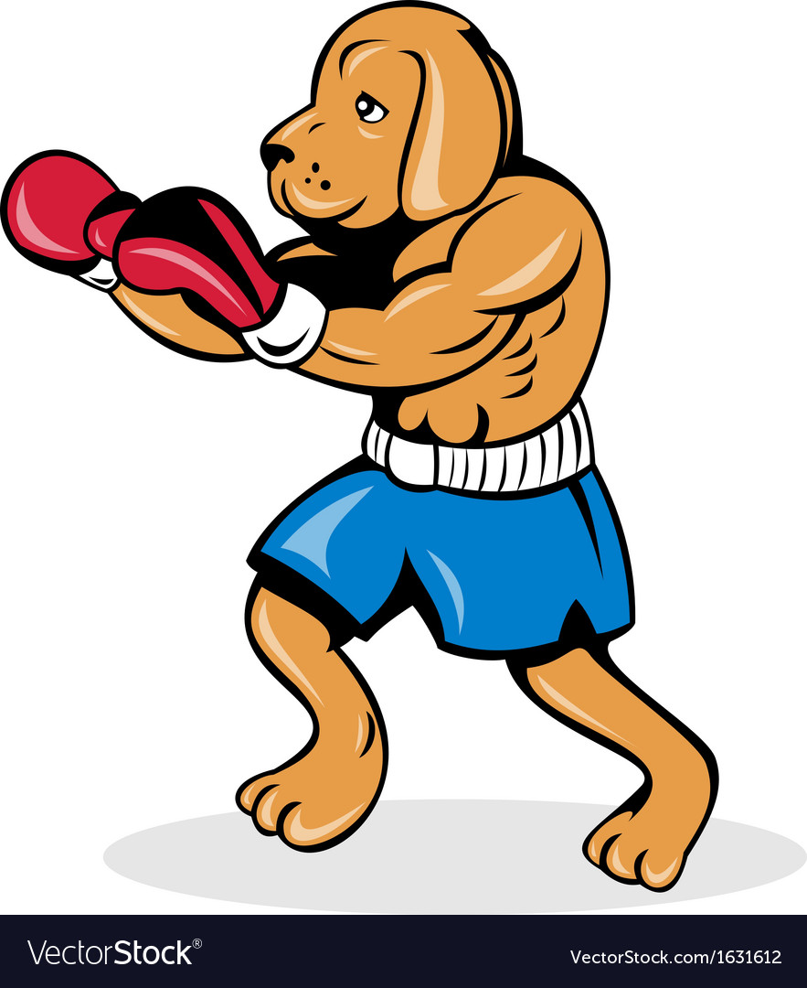 Boxer dog with gloves vector