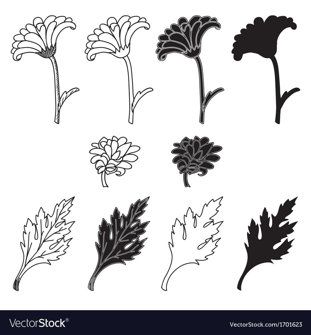 Chrysanthemum flowers and leaves vector