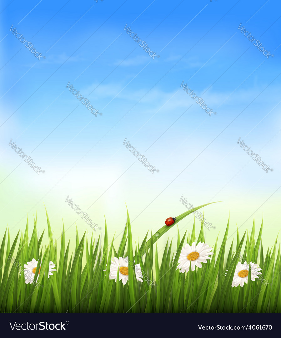 Spring background with sky flowers grass and a vector
