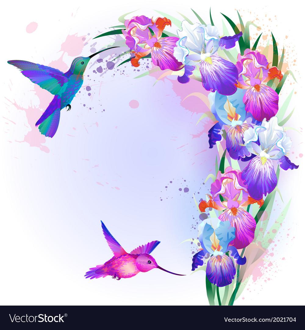 Card with iris flowers and hummingbird vector