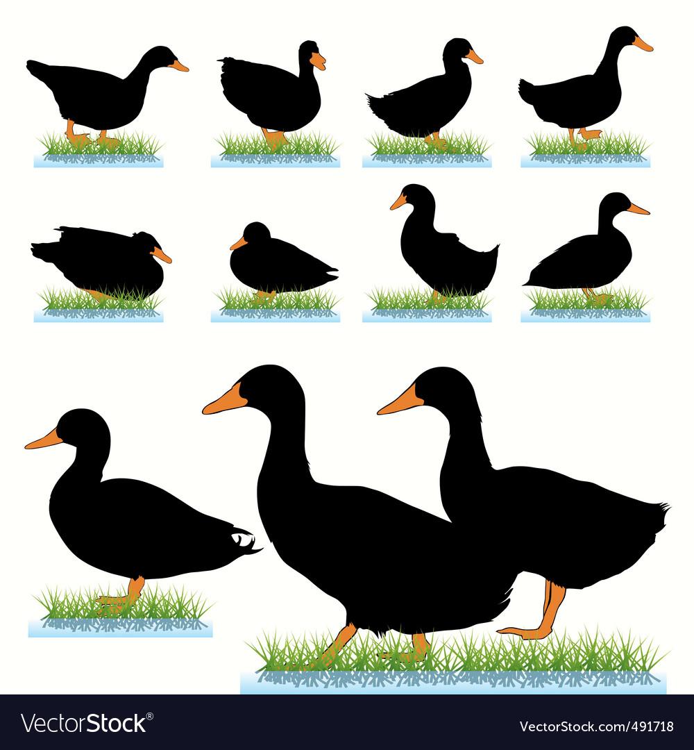 Ducks set vector
