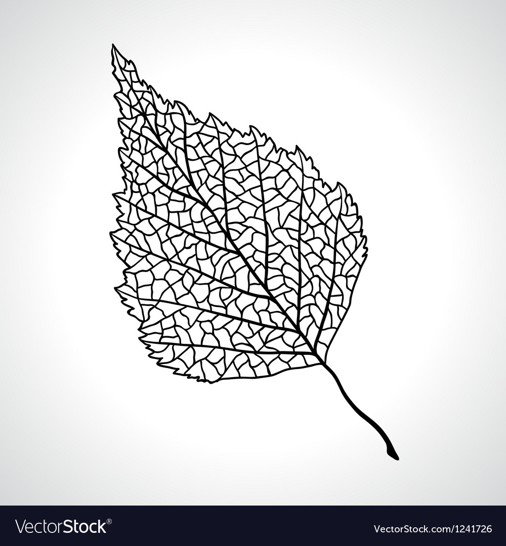 Black macro leaf of birch tree isolated vector
