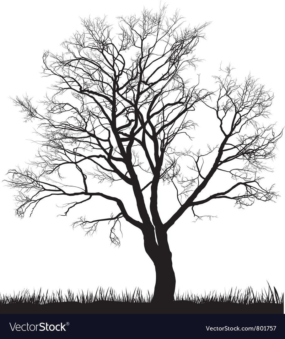Walnut tree in winter vector
