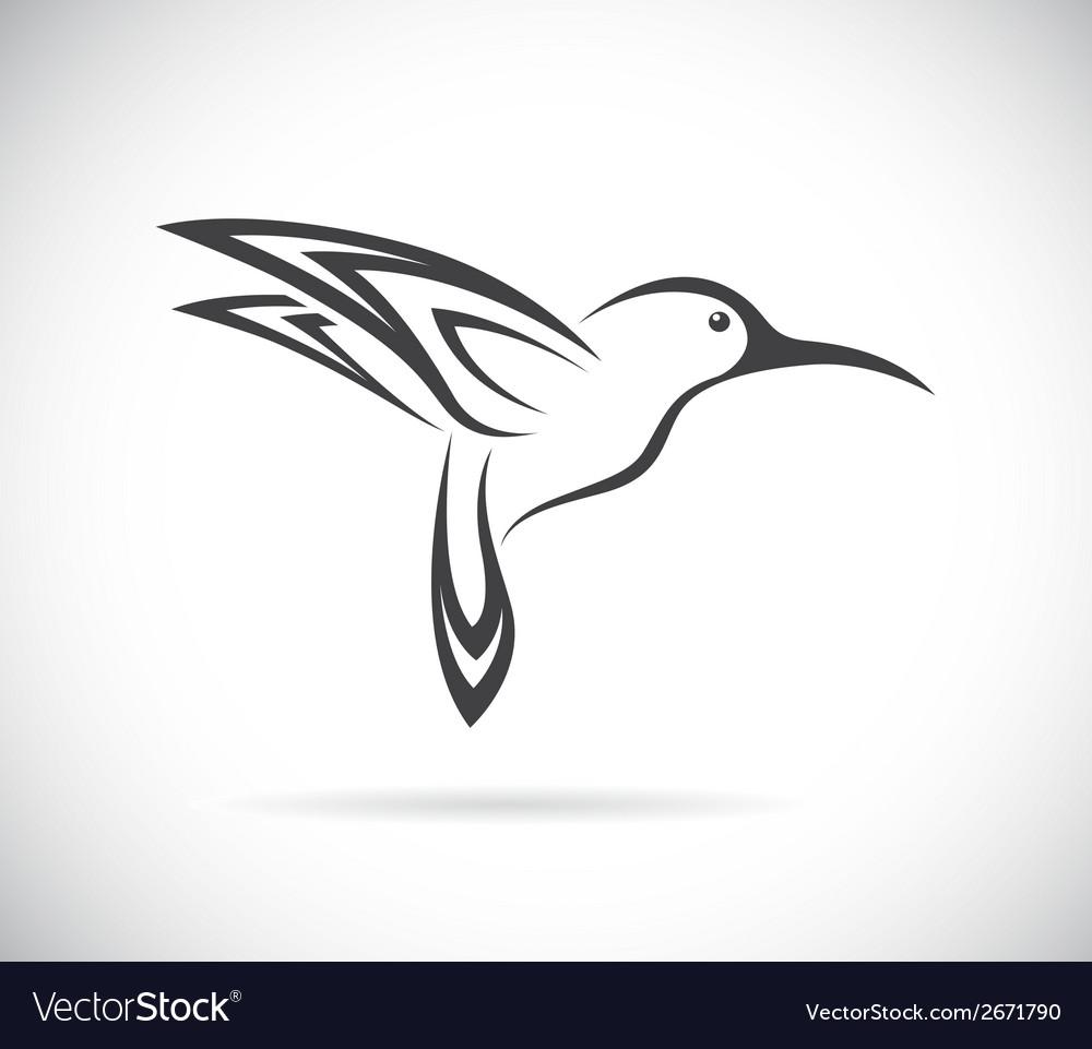 Humming birds vector