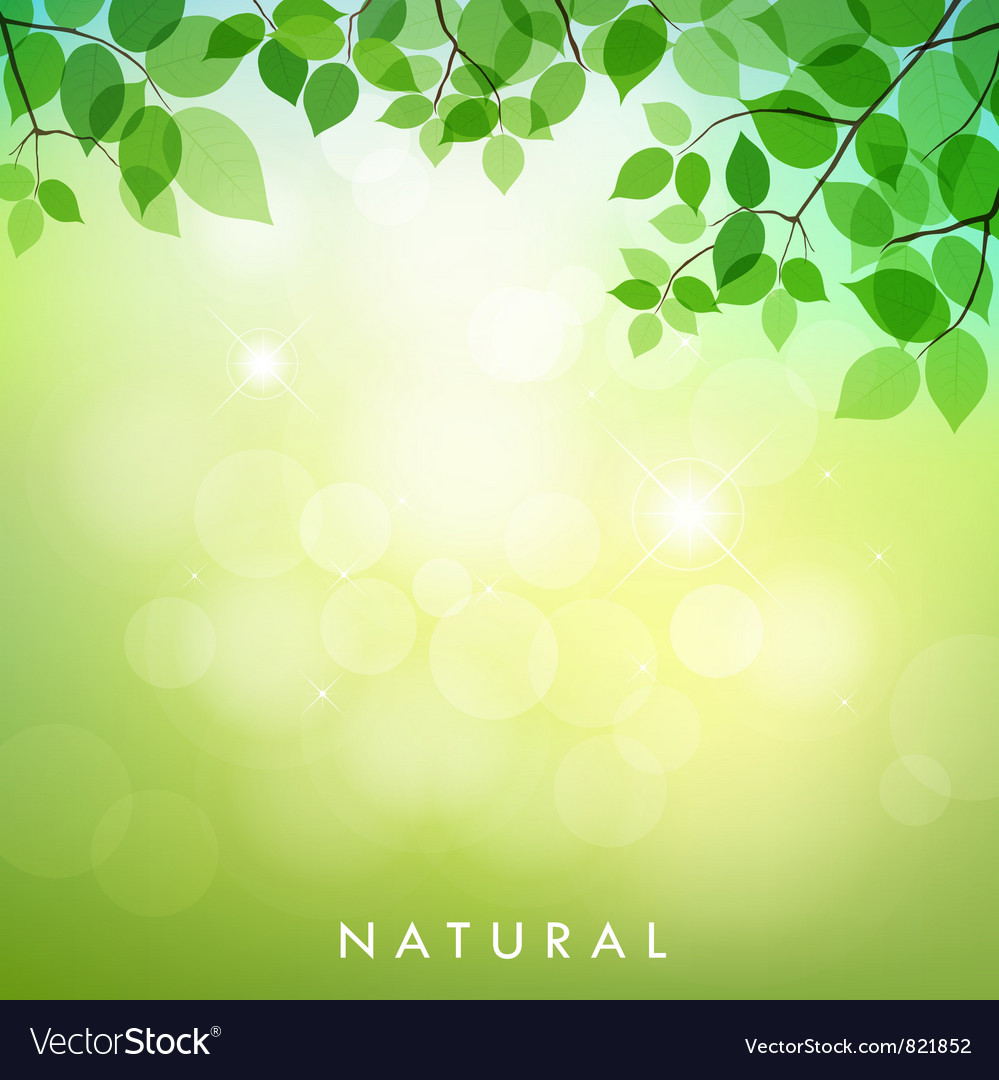 Green leaf natural background vector