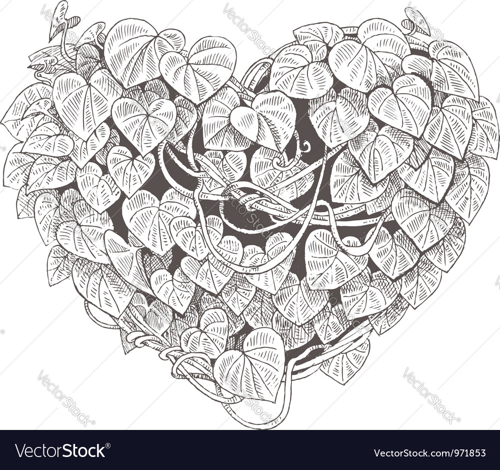 Heart of the climbing plant with leaves vector