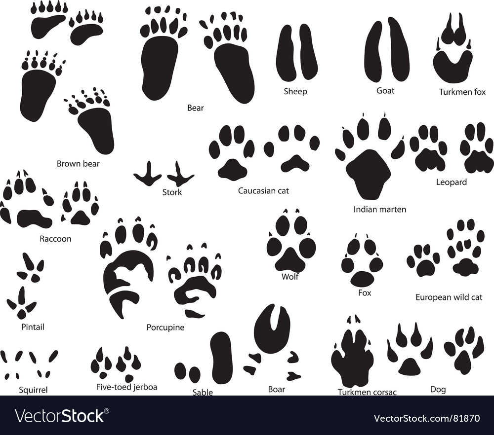 Animal trails prints vector