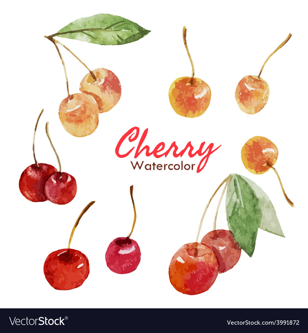Berry set vector