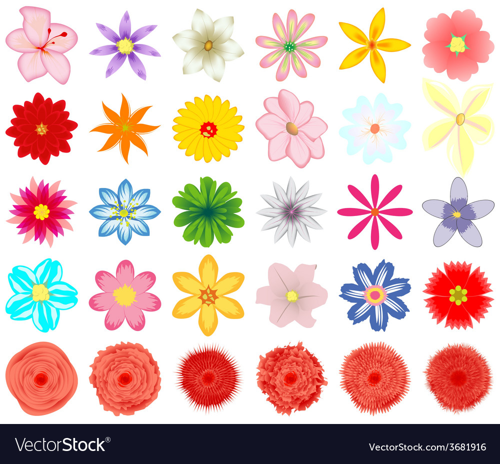 A collection of flowers for the design vector