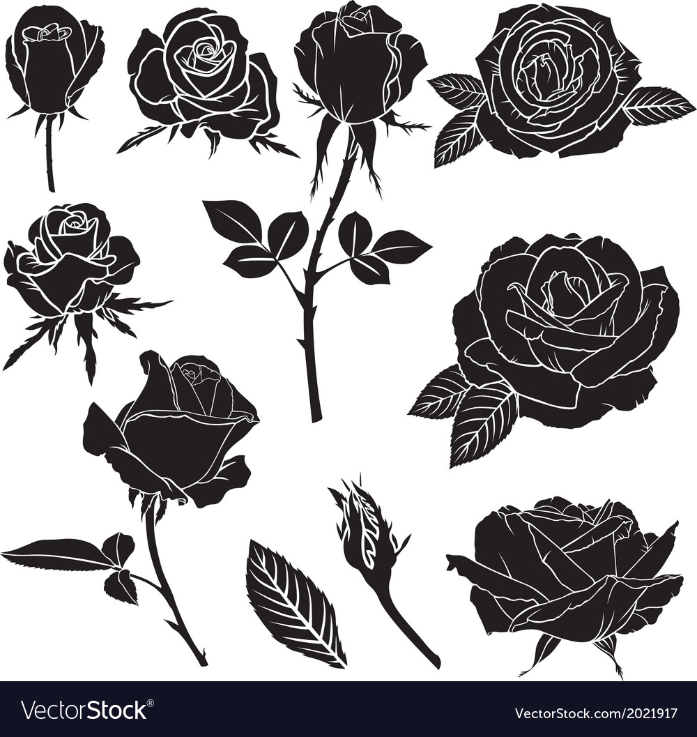 Rose collection vector