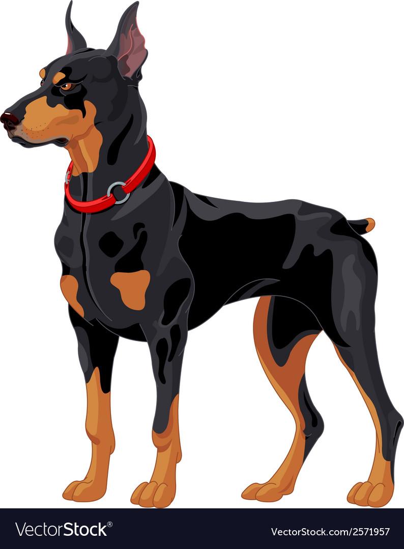 Doberman guard dog vector
