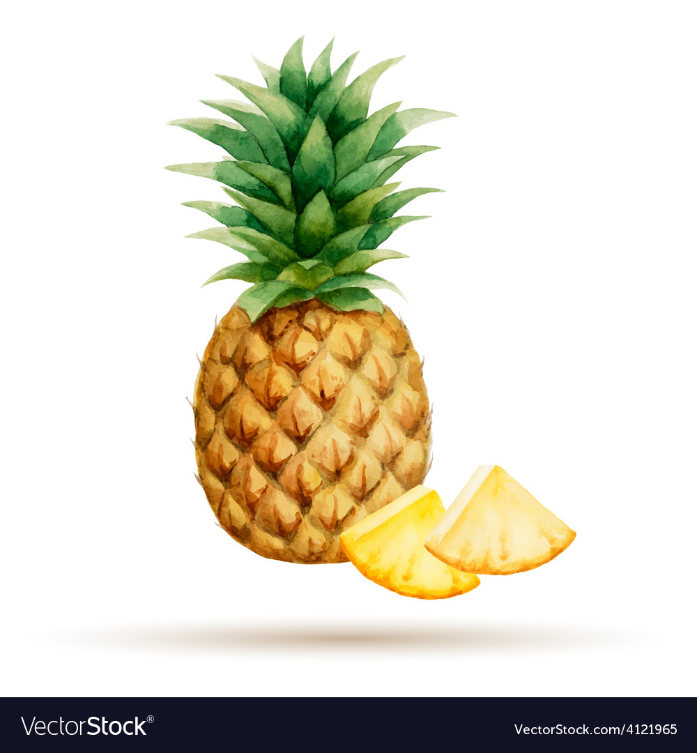 Pineapple and cloves hand drawn watercolor vector