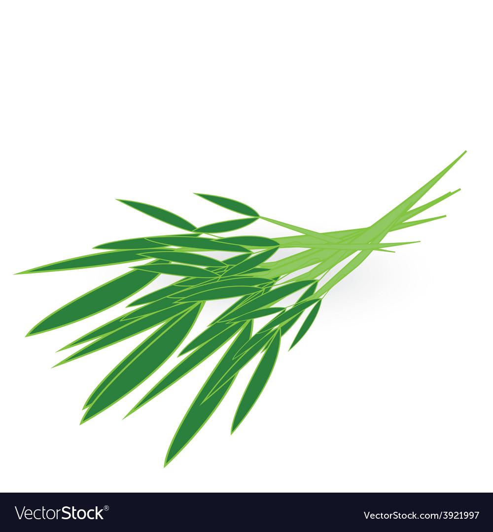 Chinese kangkong isolated on white background vector