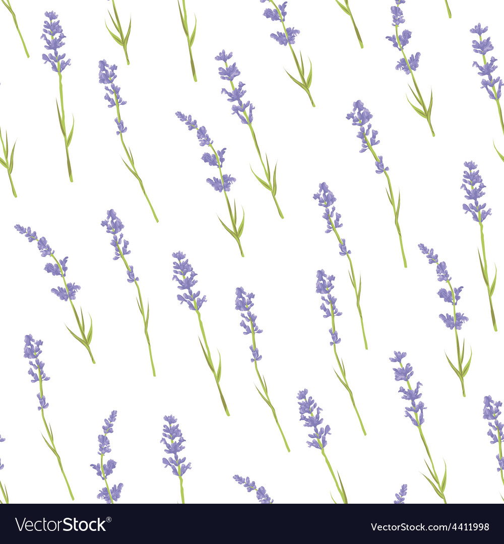 Seamless lavender pattern vector