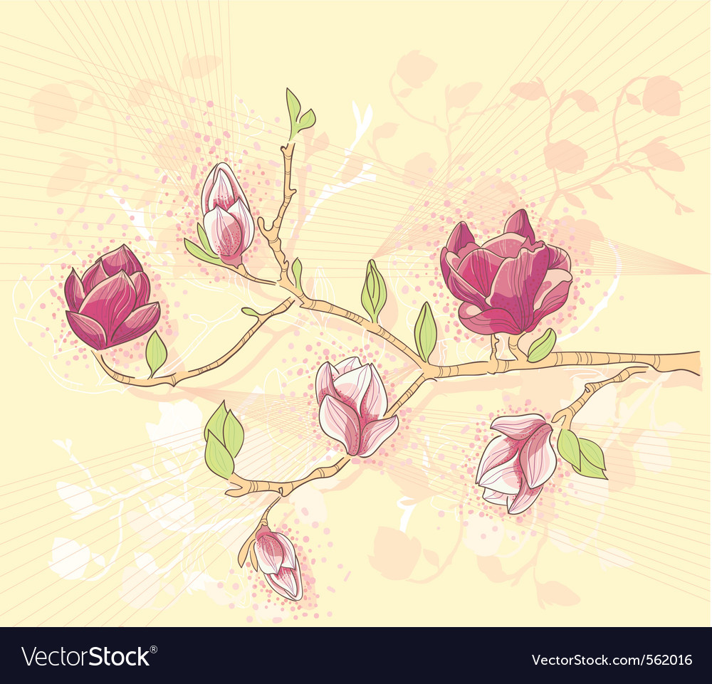 Abstract background with magnolia branch vector