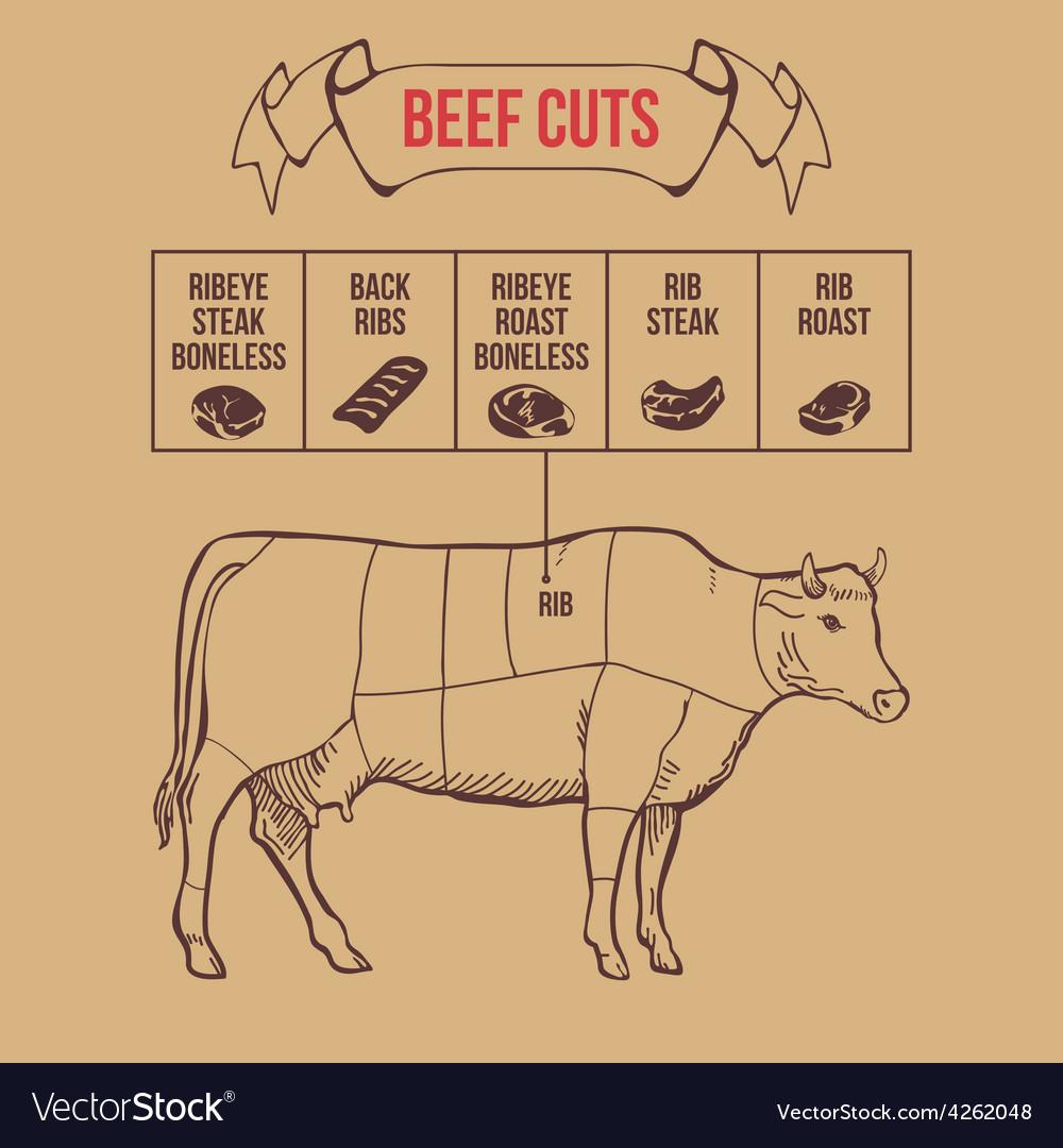 Vintage butcher cuts of beef scheme vector