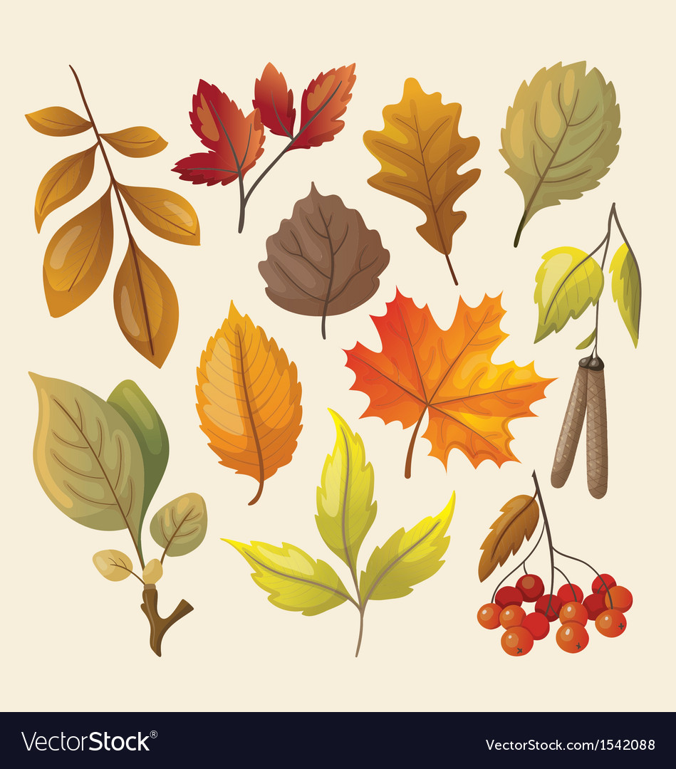 Set of colorful isolated autumn leaves vector
