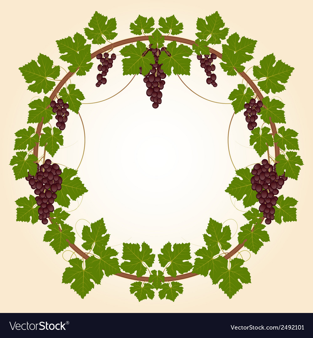 Grape round frame vector