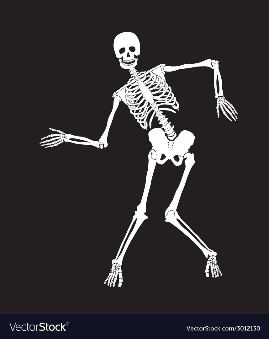 Skeleton vector