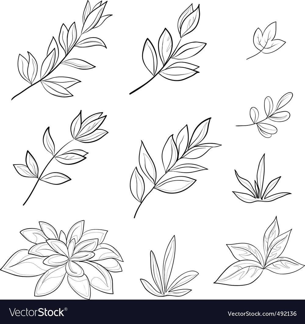 Leaves contours vector