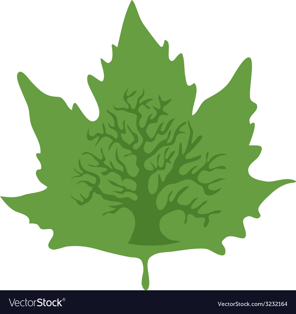 Maple-leaf vector