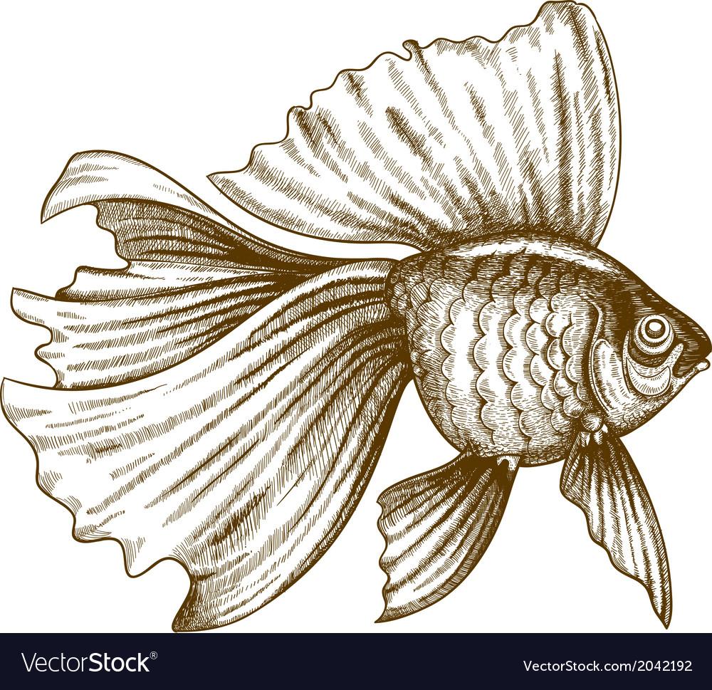 Engraving gold fish vector