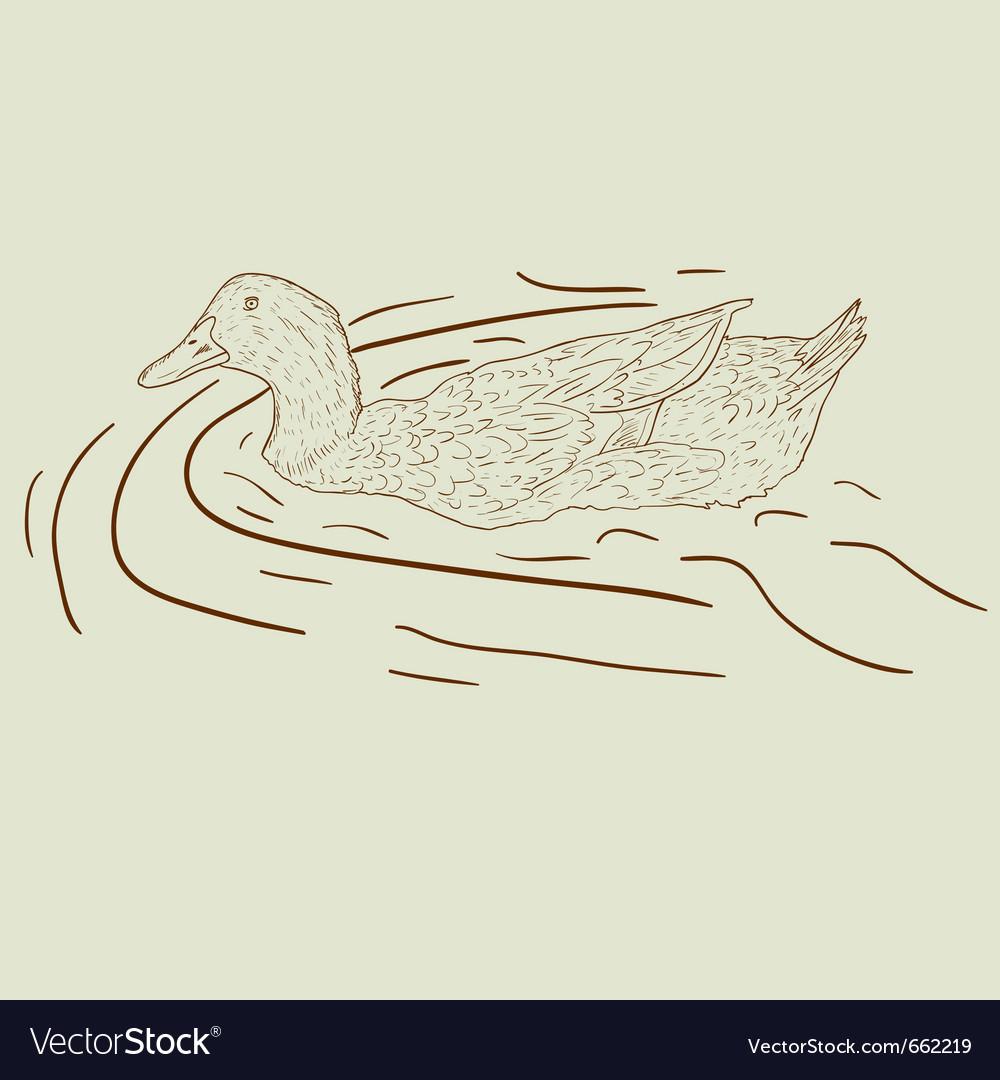 Wild duck hand-painted vector