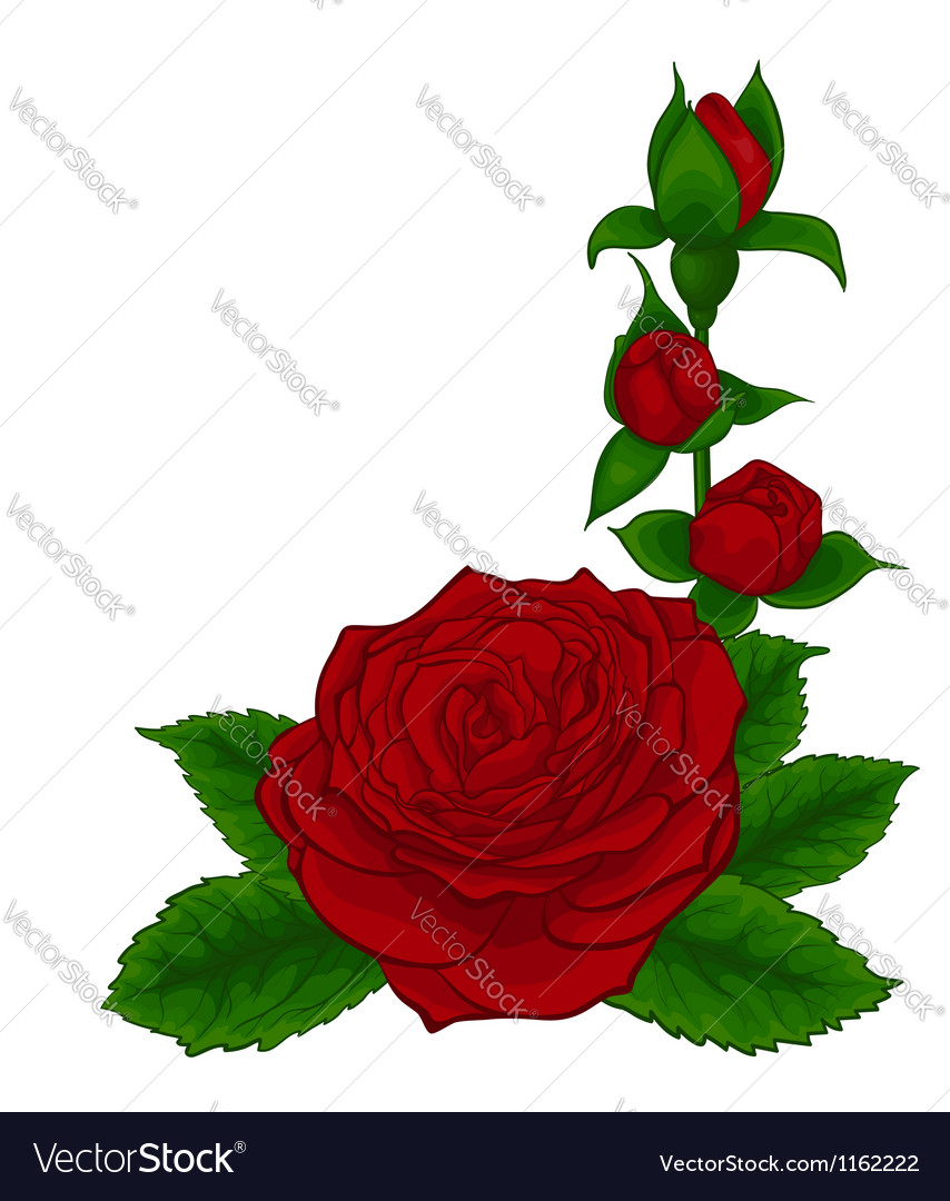 Red roses decorative floral design element vector