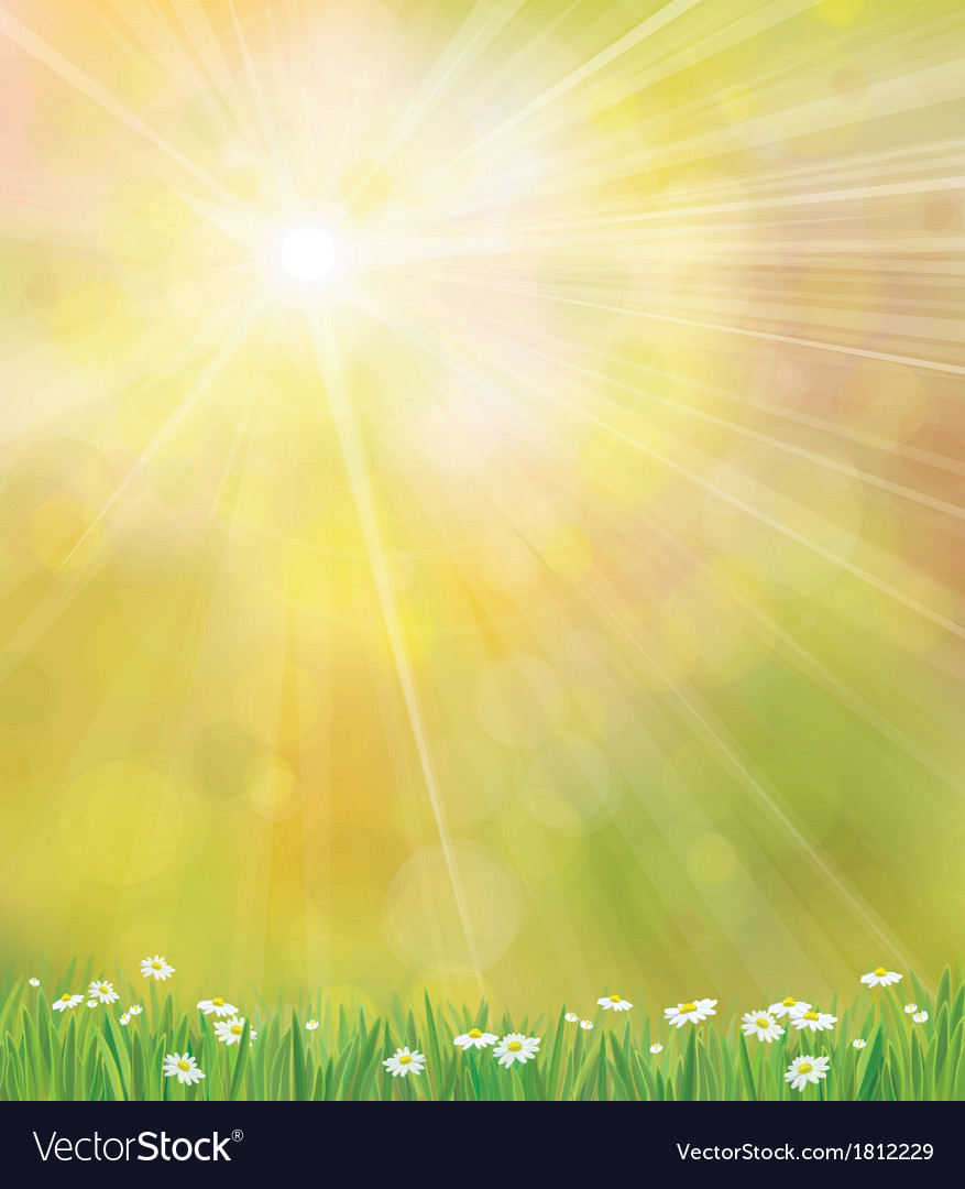 Sun grass background vector