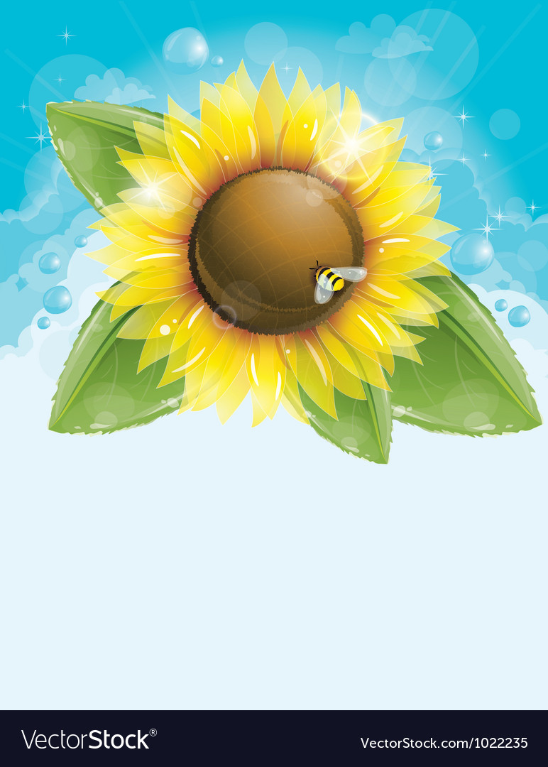 Beautiful sunflower and green leaves vector