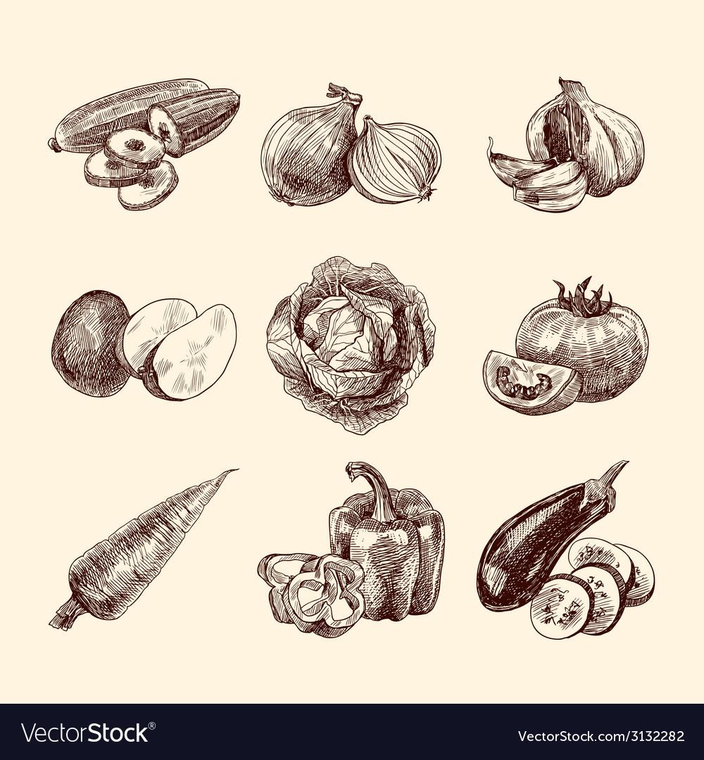 Vegetables sketch set vector