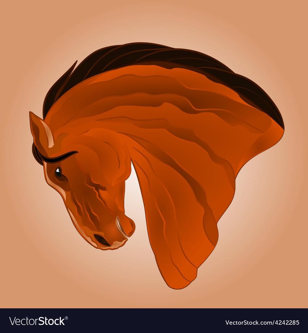 The head of light brown stallion horse vector