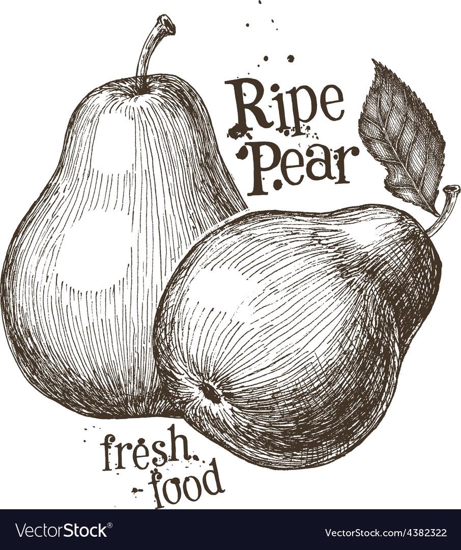 Pear logo design template fruit or fresh vector