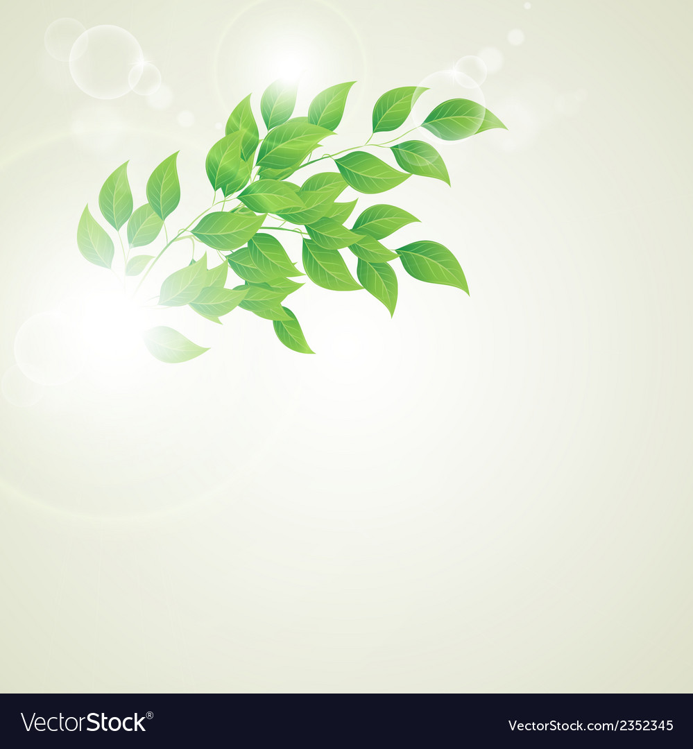 Green leaves ecology on lighting background vector