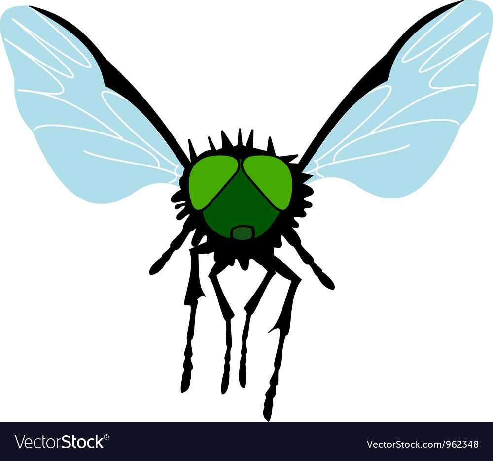 Green-eyed fly vector