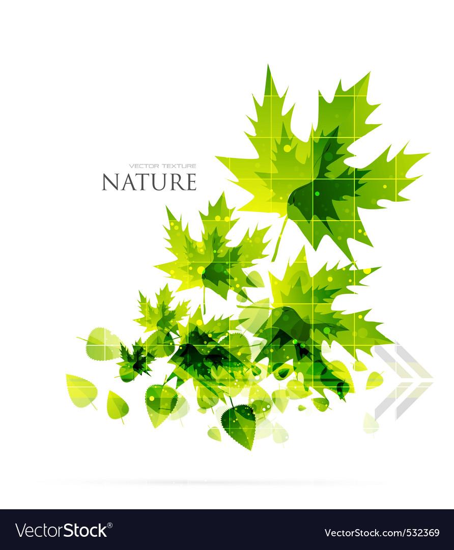 Evergreen nature vector