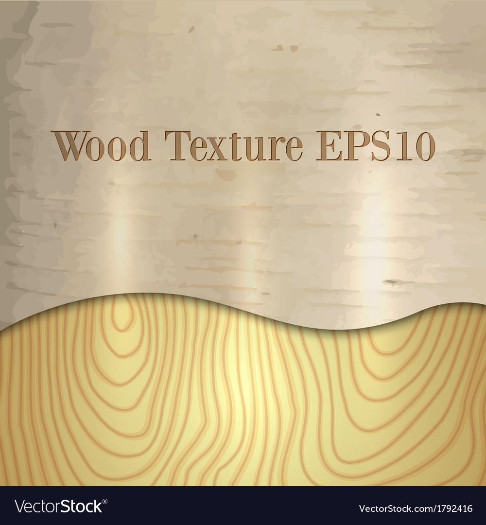 Light wood birch texture vector