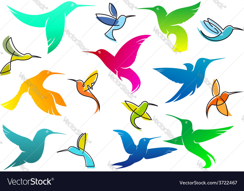 Colorful hummingbird birds vector
