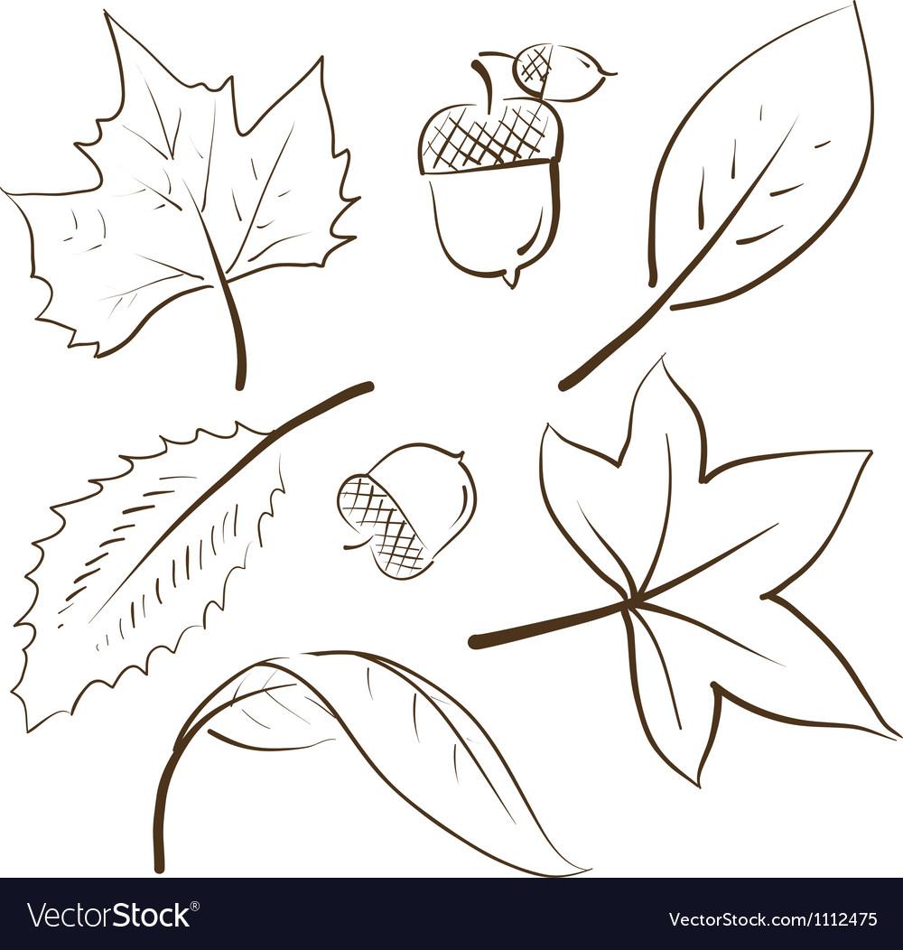Doodle autumn fall leaves acorn vector